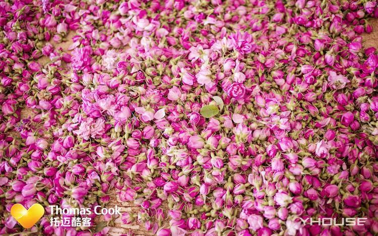 春季限定 摩洛哥8天7晚艺术浪漫之旅 玫瑰之都凯拉、马约尔花园