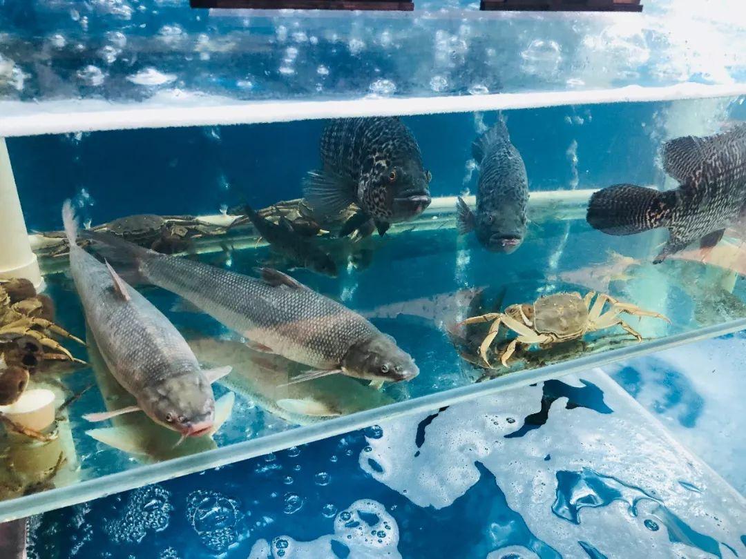 壁纸 海底 海底世界 海洋馆 水族馆 1080_810